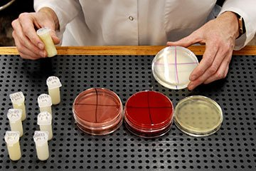 lab tech dairy testing milk